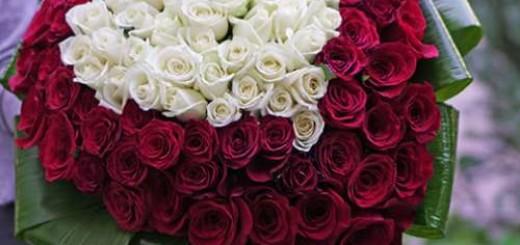 101-roses-freedom-es2-500x500