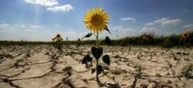 Нехватка воды разоряет аграриев в Крыму