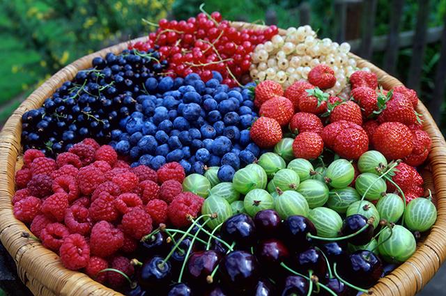 Black Currants, Red Currants, Blackthorn berries, Raspberries, Gooseberries, Cherries and Strawberries